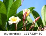 colorful flowers.group of... | Shutterstock . vector #1117229450