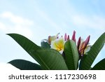colorful flowers.group of... | Shutterstock . vector #1117230698