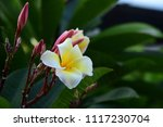 colorful flowers.group of... | Shutterstock . vector #1117230704