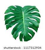 green leaves pattern leaf... | Shutterstock . vector #1117312934