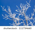 Frozen Branches On A Clear...