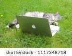 texel  dutch   5 june 2018. ...   Shutterstock . vector #1117348718