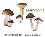 set of forest mushrooms | Shutterstock . vector #111736310