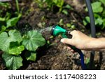 watering the seedlings of the... | Shutterstock . vector #1117408223
