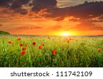 field with green grass and red... | Shutterstock . vector #111742109