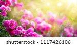 spring or summer floral... | Shutterstock . vector #1117426106