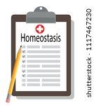 medical clipboard  homeostasis  | Shutterstock .eps vector #1117467230