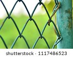 Small photo of A golden tree snake on the net is usually green in color, with black cross-hatching and yellow or gold colored accents, This image was blurred or selective focus.