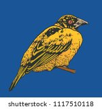 little tropical bird. vector... | Shutterstock .eps vector #1117510118