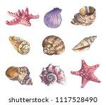 sea shell beach watercolor set...   Shutterstock . vector #1117528490
