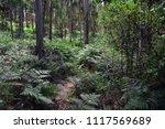 dense forest of green vegetation | Shutterstock . vector #1117569689