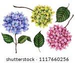 Watercolor Set Of Hydrangea...
