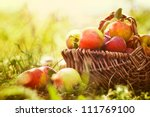 Постер, плакат: Organic apples in basket