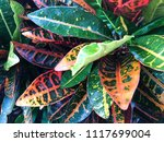 tropical colorful leaves in the ... | Shutterstock . vector #1117699004