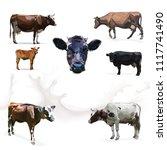 cow calf brown  vector set | Shutterstock .eps vector #1117741490