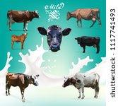 cow calf brown  vector set   Shutterstock .eps vector #1117741493