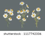 watercolor floral set of... | Shutterstock . vector #1117742336