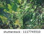 green algae  background ... | Shutterstock . vector #1117745510