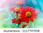 beautiful flowers on soft blur... | Shutterstock . vector #1117747058