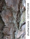 closeup of tree bark | Shutterstock . vector #1117753148