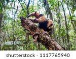 southern tamandua  photographed ... | Shutterstock . vector #1117765940