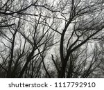 trees in winter. silhouete. | Shutterstock . vector #1117792910