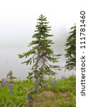 Small pine tree and wild flowers in fog with lake on the background. Mt. Rainier national Park area. Naches Peak Loop Trail in August. Roundtrip 3.0 miles, Elevation Gain 600 ft, Highest Point 5849 ft - stock photo