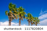 palm trees against blue sky at... | Shutterstock . vector #1117820804