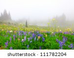 Beautiful wild flowers field with lake in the mountains with trees.  Mt. Rainier national Park area. Naches Peak Loop Trail. Roundtrip 3.0 miles, Elevation Gain 600 ft Highest Point5849 ft - stock photo
