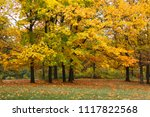 autumn landscape. maple trees... | Shutterstock . vector #1117822568