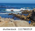 pacific grove  ca   usa  ... | Shutterstock . vector #1117883519