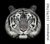 Headshot Of White Tiger Face ...