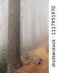 mystery trail through the...   Shutterstock . vector #1117951970