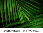 green palm leaves background | Shutterstock . vector #1117976063