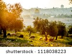 Beautiful Landscape With Sheep...