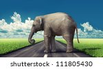 Elephant On The Road Concept ...