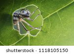 Stock photo macro shots beautiful nature scene dragonfly showing of eyes and wings detail dragonfly in the 1118105150