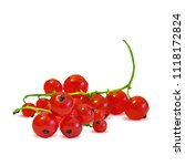 fresh  nutritious and tasty red ... | Shutterstock .eps vector #1118172824