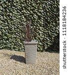 outdoor plant in garden | Shutterstock . vector #1118184236