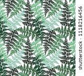 fern frond herbs  tropical... | Shutterstock .eps vector #1118216456