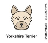 yorkshire terrier color icon....   Shutterstock . vector #1118264996