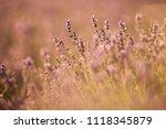 sunset over a violet lavender... | Shutterstock . vector #1118345879