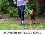 Stock photo close up of baby boomer adult woman purple shirt and black pants running on a trail in the woods 1118356913