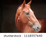 Stock photo horse portrait animal 1118557640