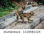 mating of monkeys in thailand. | Shutterstock . vector #1118581124