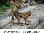 mating of monkeys in thailand. | Shutterstock . vector #1118581814