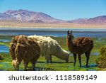 lamas and stone formation ... | Shutterstock . vector #1118589149
