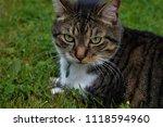 gatineau  quebec   canada  ... | Shutterstock . vector #1118594960