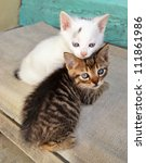 Stock photo two cute white and brown kittens playing on a porch 111861986