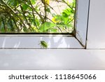 southern green stink bug finds... | Shutterstock . vector #1118645066